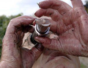 Von Traubensaft verschmierte Männerhände halten Oechslewaage, durch die ein Mann mit Brille schaut