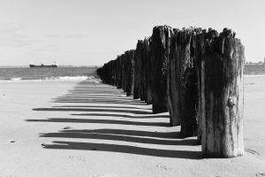 Vom Meer abgewaschene Baumstämme reihen sich vom Strand ins Wasser