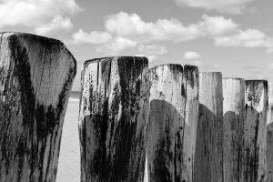 Verwaschene Holzstämme am Strand vor Wolkenhimmel