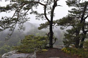 Bäume auf dem Rötzenfelsen bei Regenwetter mit Blick über den Wald