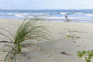 Dünengras vor beigem Sandstrand und blauem Meer