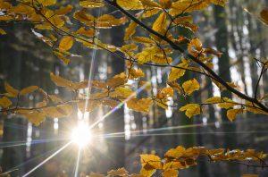 Sonne scheint im Gegenlicht durch Herbstbäume