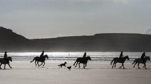 Reiter mit Hunden im Gegenlicht am Strand