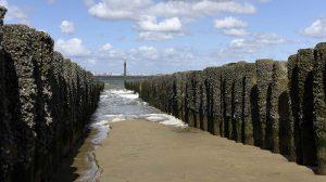 Blick vom Strand auf Flussmündung der Schelde ins Meer durch überwucherte Pfosten hindurch