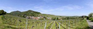 Panoramaansicht aus dem Weinberg im Frühling