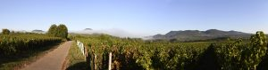 Panoramafoto aus dem Weinberg