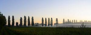 Panorama von beginnender Morgenröte hinter Baumallee mit Nebelschwaden im Vordergrund