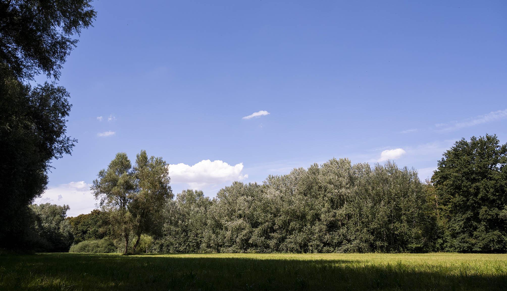Wiese umringt von Bäumen im Auwald am Altrhein