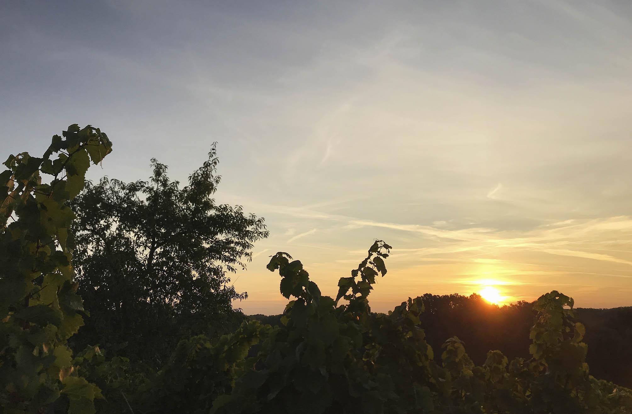 Sonnenaufgang über den Weinbergen