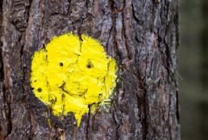 Farbmarkierung in Form eines gelben Smilies auf einem Baumstamm