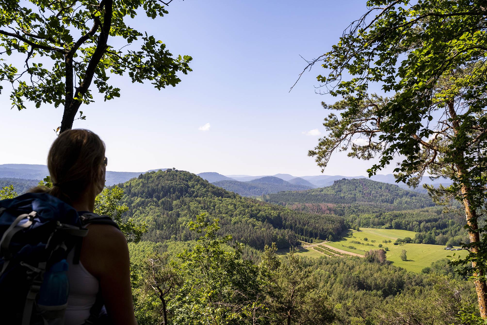 Aussicht auf den Pfälzer Wald vom Immersberg