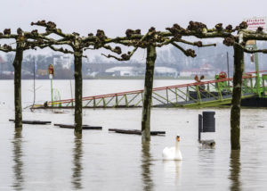 Schwan schwimmt über die Speyerer Rheinpromenade