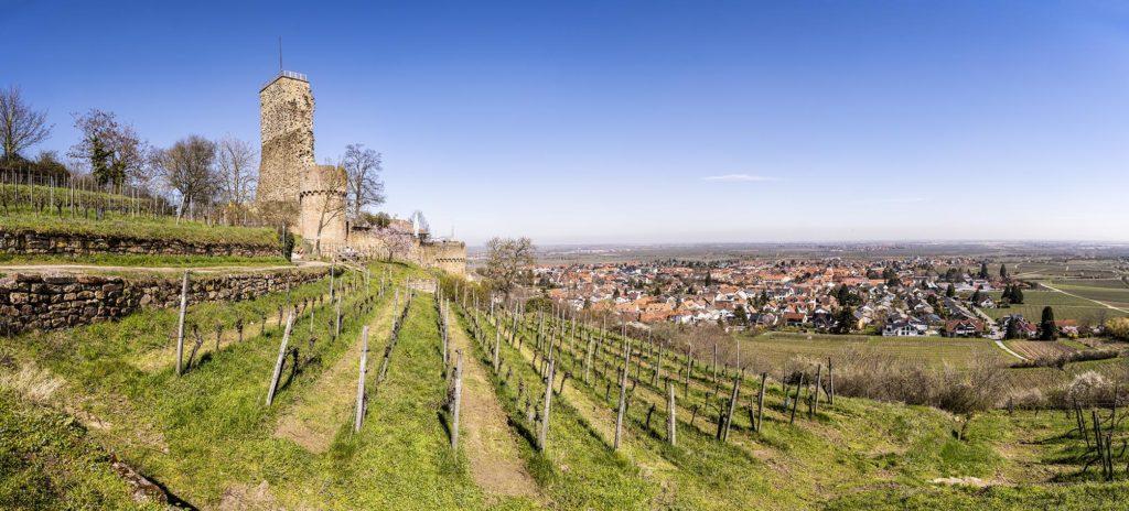 Burgruine hinter kahlem Weinberg vor blauem Himmel, im Hintergrund bergab der Ort