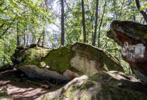 Der Klingel-Kopf im Pfälzerwald