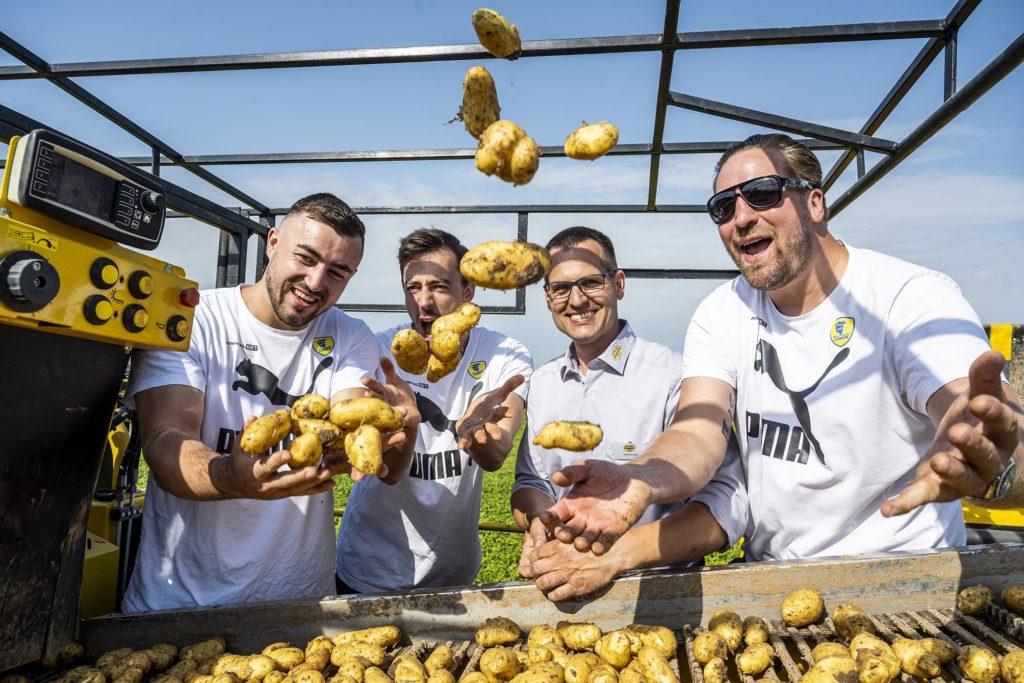 Jannnik Kohlbacher, Patrick Groetzki, Hartmut Magin, und Oliver Roggisch fangen die auf der Rodemaschine reinkommenden Kartoffeln auf