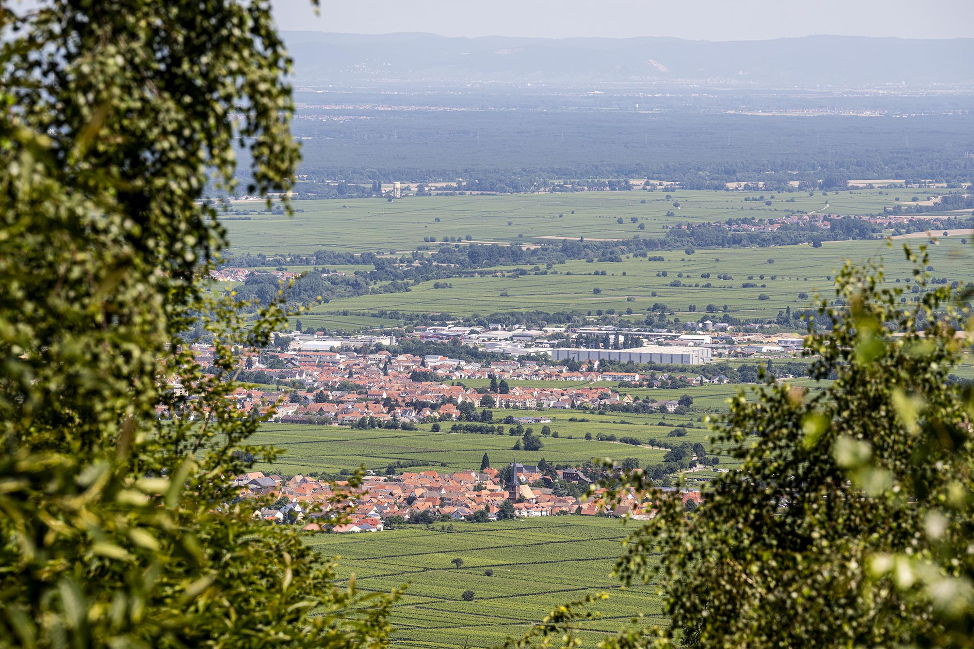 Blick auf die Rheinebene vom Pfälzerwald über Burrweiler aus
